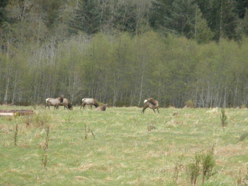 sayward_valley_wildlife_4_20120323_1061790225.jpg